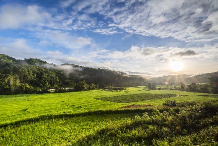 Contrato de dedetização para o setor rural, fazenda, sítio: você conhece o procedimento?