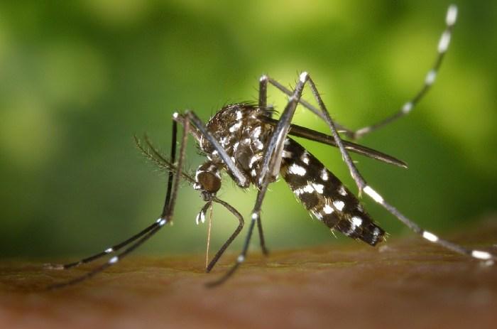 Dengue - Dedefone