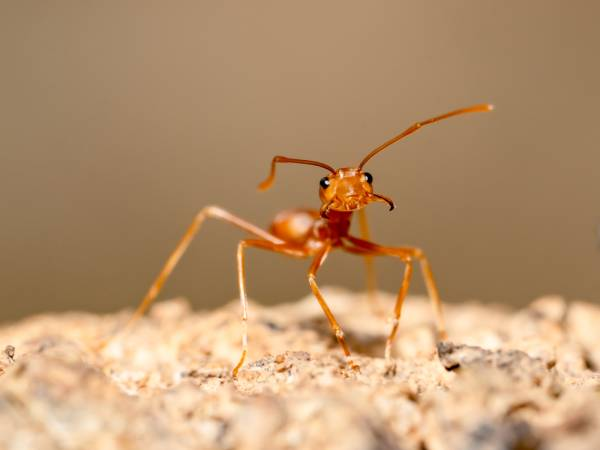 Controle de pragas - formigas