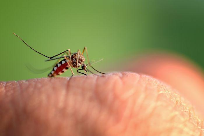 Os mosquitos são um problema para você? Saiba como funciona o serviço de desinsetização
